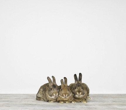 Three Bunnies, 7 x 8 Fine Art Print