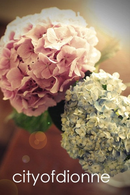 Hydrangea Day (Photography Print)