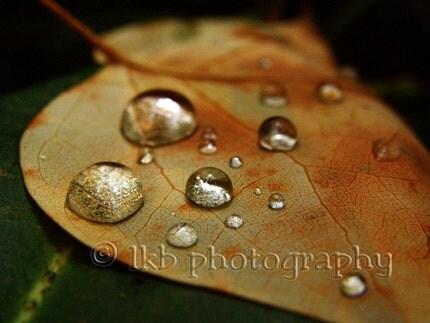 Rain  Droplets on Leaf 8x10 Nature Photography Print