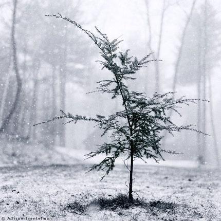 Little Tree, 10x10 matted fine art print
