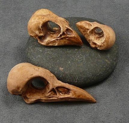 Set of 3 Faux Bird Skulls--Free Shipping
