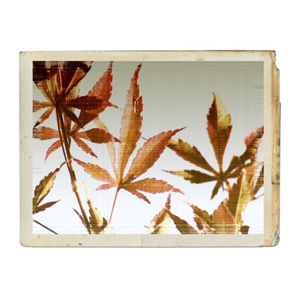 Vintage Autumn Leaves Fine Art Photograph by galleryzooart on Etsy
