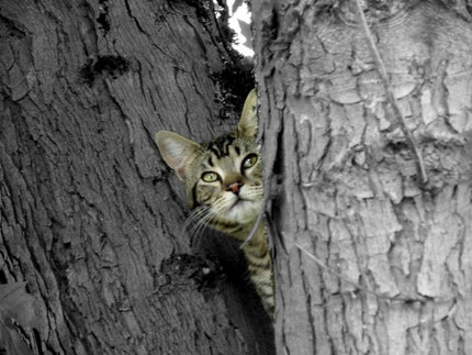 Hiding in the tree ... Photographic ACEO