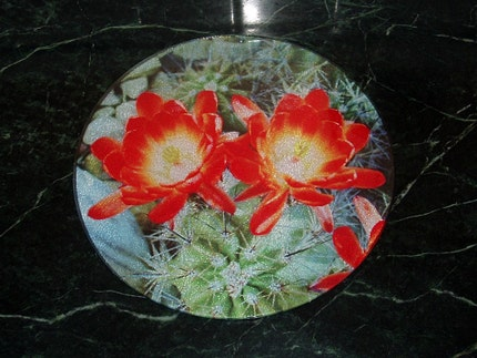 Claret Cup Cactus Flowers - Round Tempered Glass Cutting Board