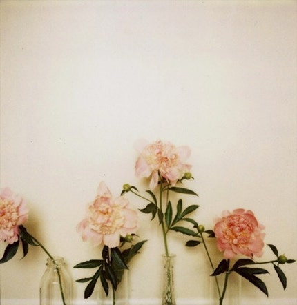Peony 2- Signed Fine Art Photograph