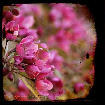 One Fine Day..............................8x8 Fine Art Photo.......... by Amanda Graham