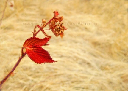 Red Leaf Brier 8x10 Fine Art Photograph