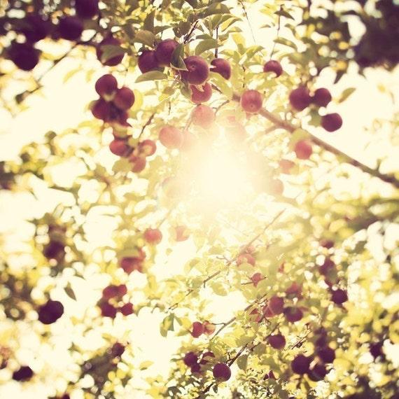 Under the apple tree - Fine art print