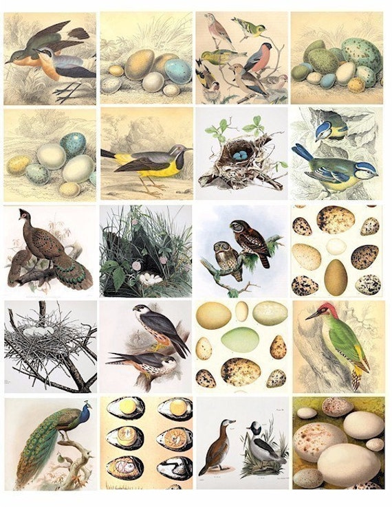 eggs nest clip art 1800s