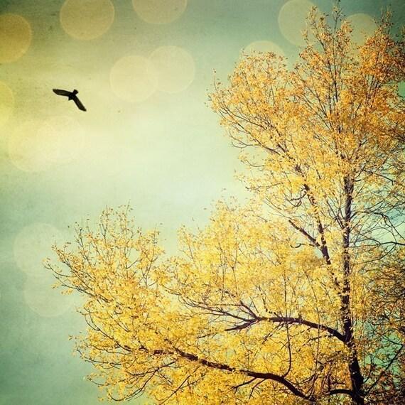 Tell the sky - Fine art photograph