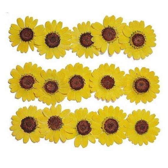 Pressed Flower  - marguerite set