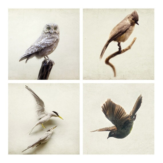 SALE - Of a feather - Set of four 5x5 fine art prints