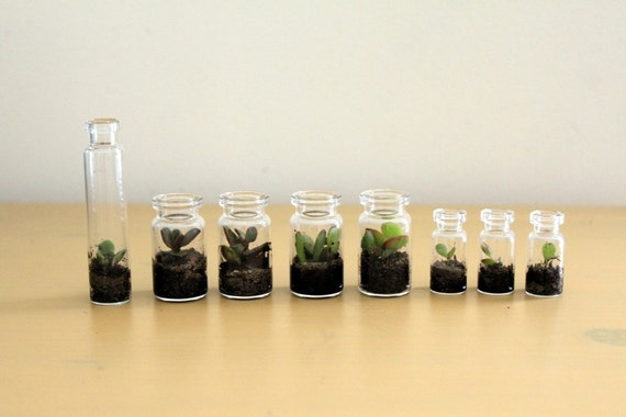Party Pack Tiny Terrariums FREE SHIP 50 count