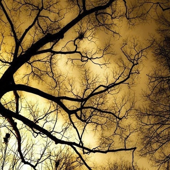 Burning Sky - harvest gold twilight sky seen through the bare branches of an october night - a thanksgiving Photograph under 15 dollars - a metallic fine art tree print (5x5) 50 percent off sale