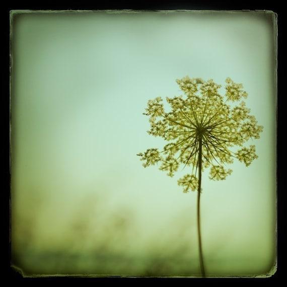 Simplexity - Fine art photograph - flower - TTV