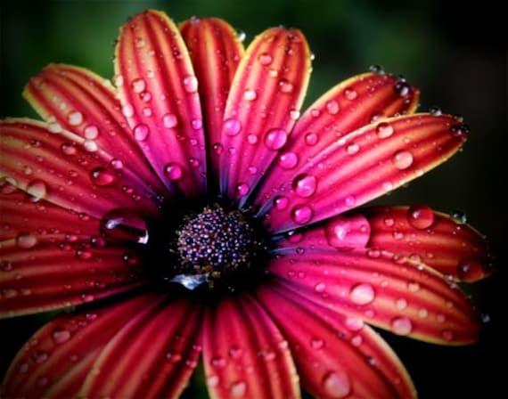 Rainy Day Flower