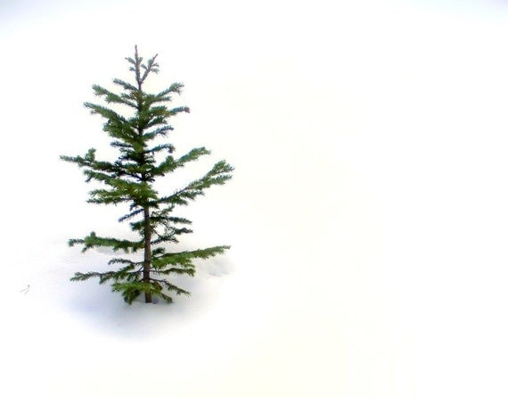 Charlie Brown's Christmas Tree - Fine Art Photography