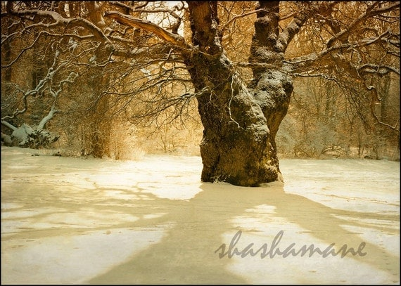 "Gateway to dreams - Magical, snowy, fairytale mood 5 x 7 "" print fine art photography"