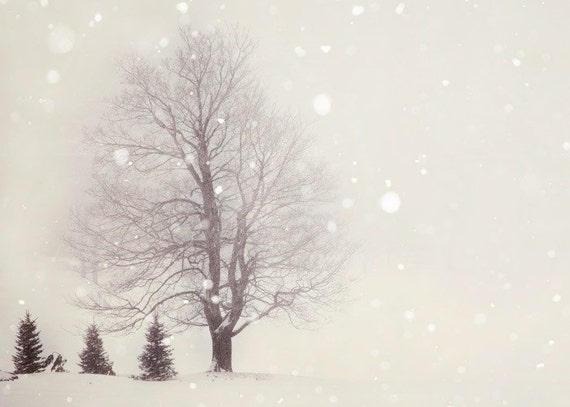 Snow flurries - Winter Photograph in Pale Ivory White, Trees, Landscape, Nature Photography