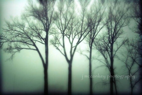 Buy 1 Get 1 FREE Sale Trees on a Foggy Morn 8x12 Fine Art Photograph fathers day graduation gift