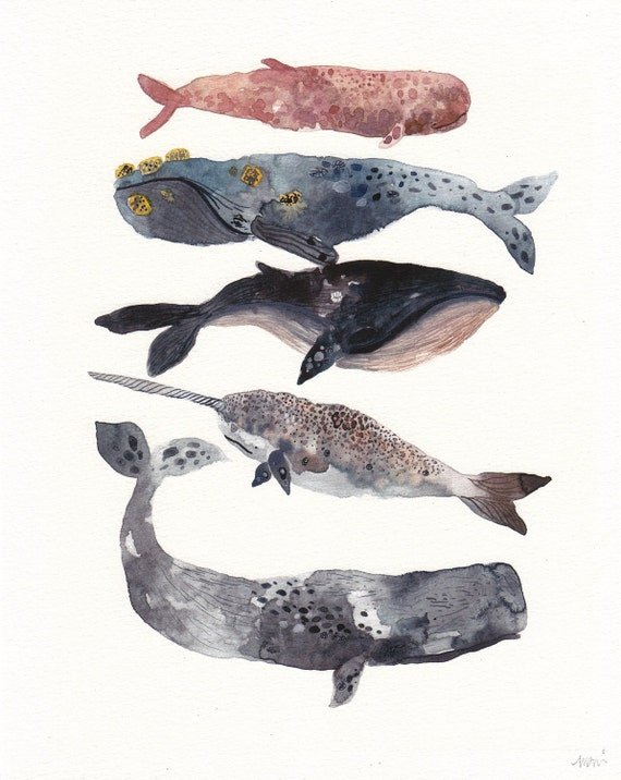 Five Whales Stacked - Archival Print