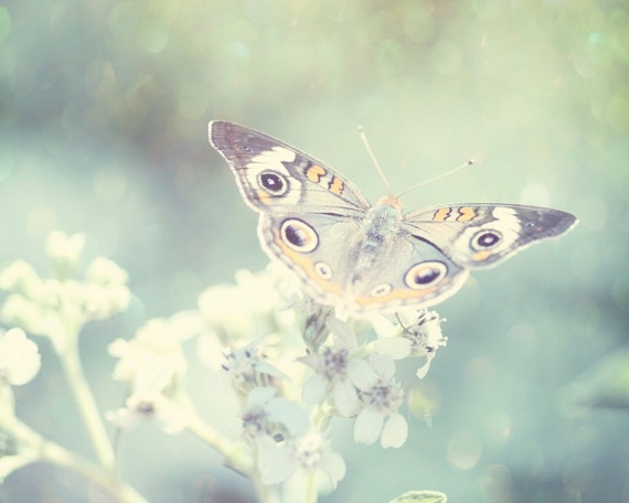 Fine Art Photography. The Speckled Butterfly. 8x10 Dreamy Whimsical Magical Butterfly Photo