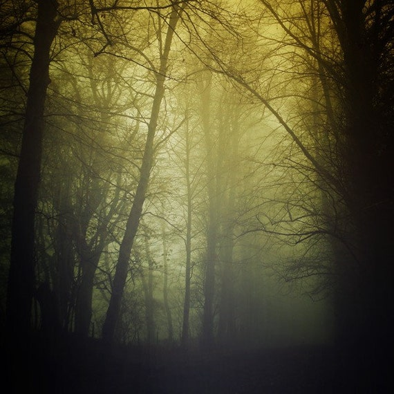 Beauty Hides in Darkness - 4x4 photo featuring green and yellow mist in a dark gothic forest