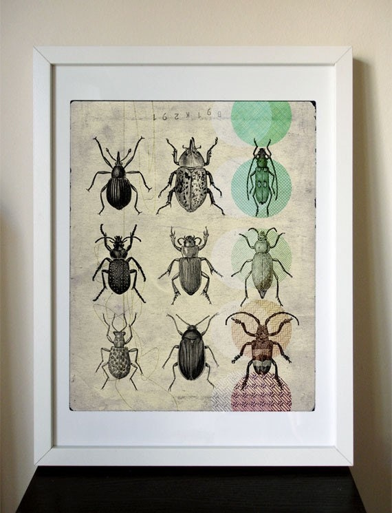 12x16 Giclee Print - Beetle Collection