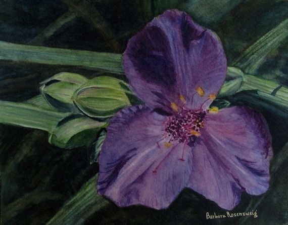 Purple Passion Spiderwort Floral Art: Limited Edition Matted Watercolor Print 16x20