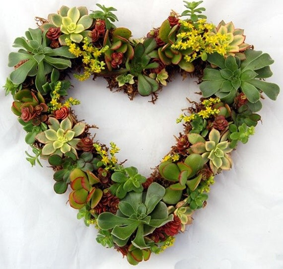 "Valentines Heart Succulent Wreath 14"" Romantic Gift"