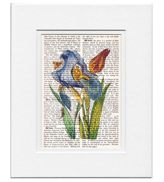 IRIS and Tulip Artwork on a page from vintage Dictionary - FREE Domestic Shipping