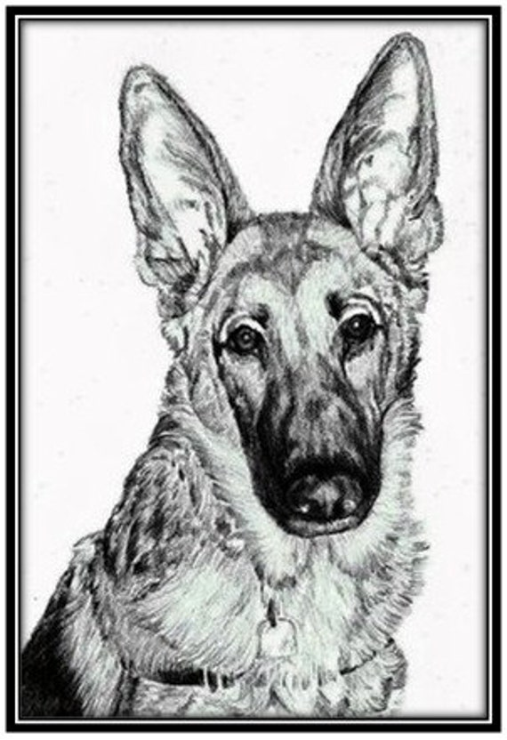 Custom Pet Portrait in Pencil 8 x 10