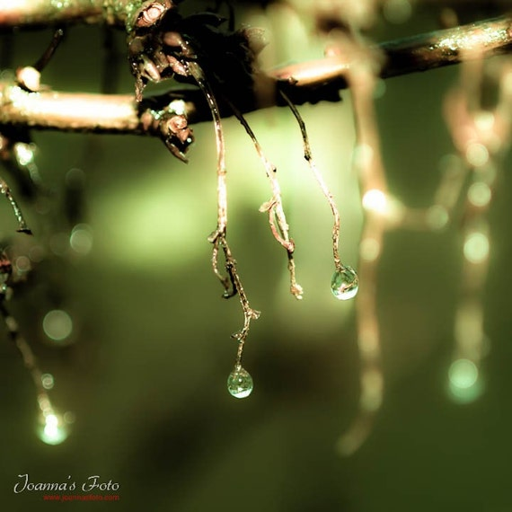 "Spring Mist-  bare wet spring branches with drops of dew, 10x10"" (25x25cm) size print"