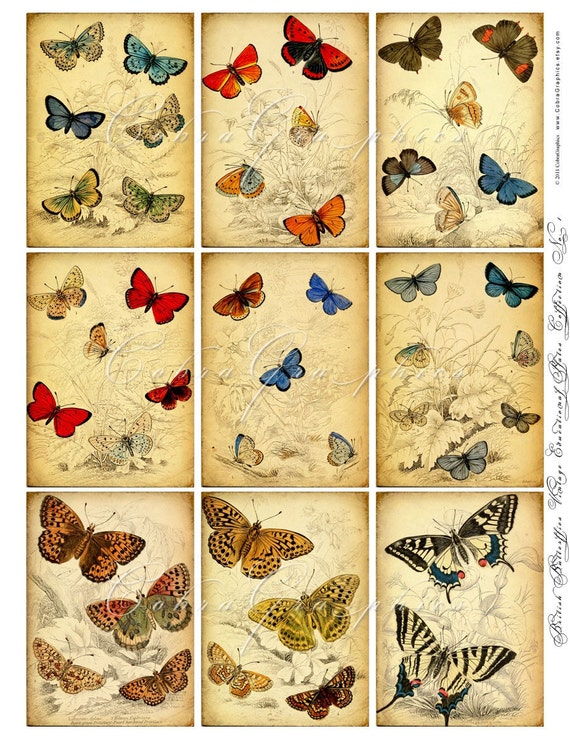 British Butterflies Vintage (1890s) Educational Plates - Digital Backgrounds CG-53 for ATC ACEo Crafting Scrapbooking Magnets Stickers JPG