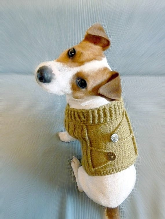 Knitted Mustard Dog Sweater / Dog coat / Dog costume / Dog Clothes / fttt / est / tpt / Rusteam  / capsteam / tfteam  / em