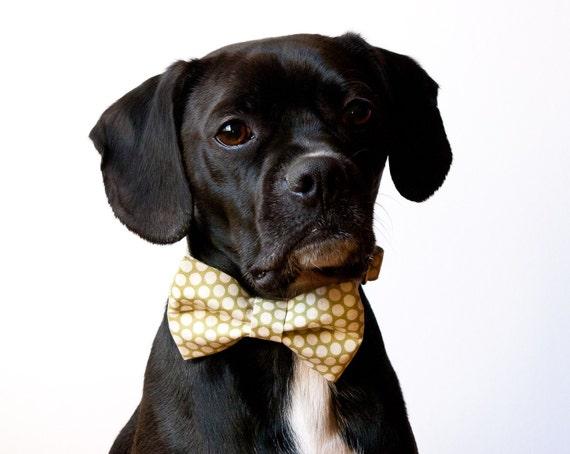 Sage Honeycomb Bow Tie Dog Collar