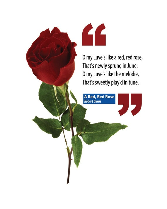 "a literary analysis of a red red rose by robert burns Free essay: robert burns has created many magnificent poems but the most charming, is ""oh, my love is like a red, red rose"" this poem is the essence of all."