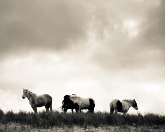 Wild as the Wind - 8x10 Original Fine Art Photograph - Horses - Ireland - Black and White - Countryside