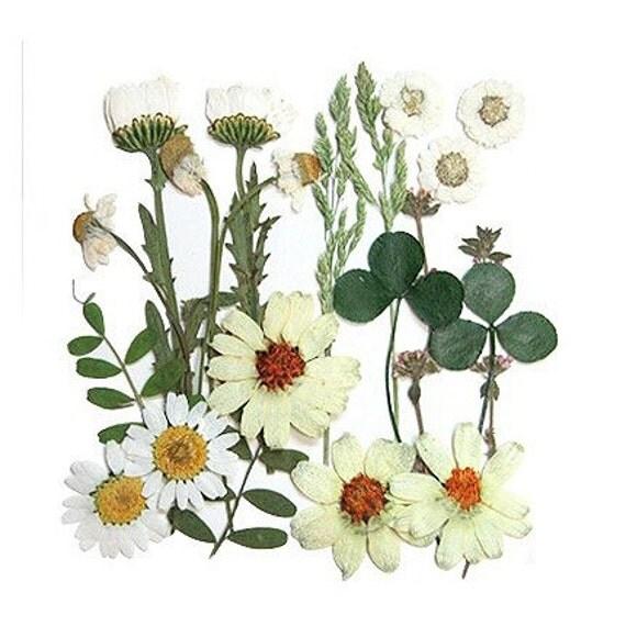 mixed flower set