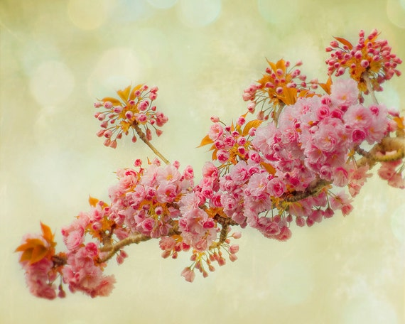 Cascade Fine Art Flower Photography Print 8