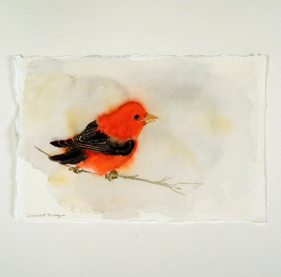 Art Watercolor Print Bird Scarlet Tanneger Nature Black and Red Bird Lovers Bird Watcher Gift Under 25 USD