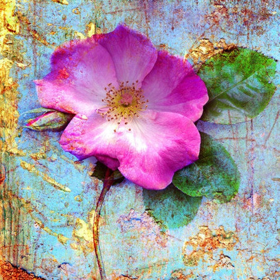 Rugosa роза (4x4 дюйм холст мини)