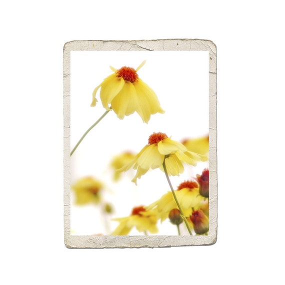Sunshine Fine Art Flower Photograph Yellow Butter by Catherine Jeltes as galleryzooart on Etsy from etsy.com