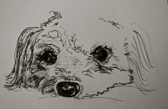 "PUPPY sketch, 5""x7"", very cute"
