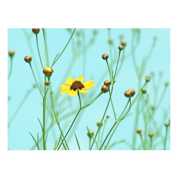 Summer Day Fine Art Flower Photograph Yellow by Catherine Jeltes as galleryzooart on Etsy from etsy.com