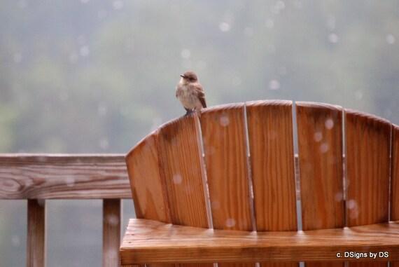 Little Bird in the Rain Photo/Note Card
