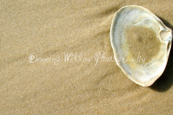 Beach Shell 5 x 7 Fine Art Print
