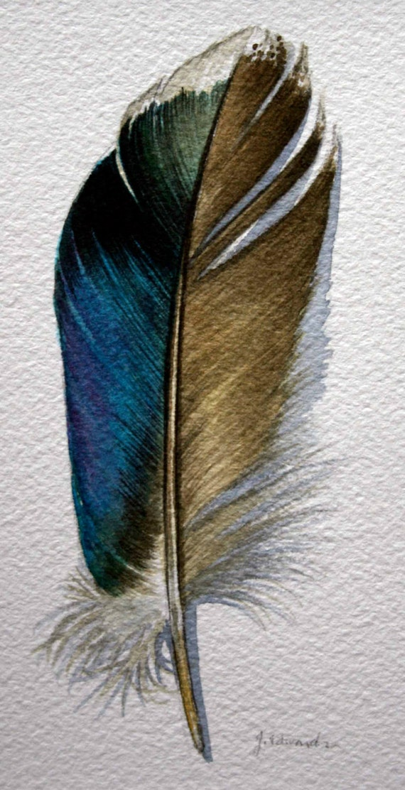 Watercolor Feather watercolor feather