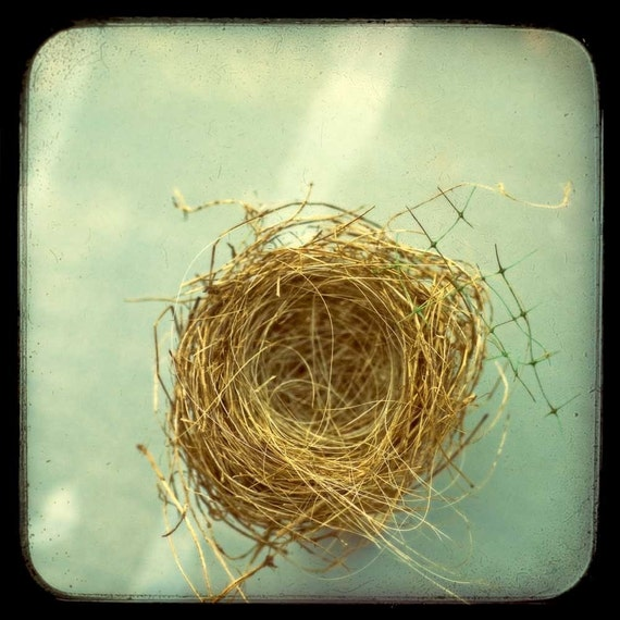 Empty Nest - Fine Art Nature Photography - Brown bird's nest on a sea of teal blue - 8x8