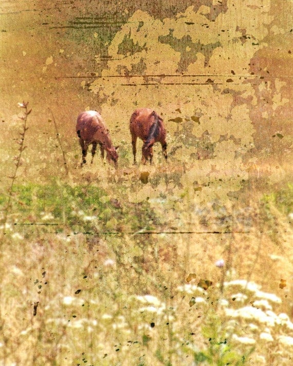 Horse Photograph Rustic Horses Animal Fine Art by Catherine Jeltes as galleryzooart on Etsy from etsy.com